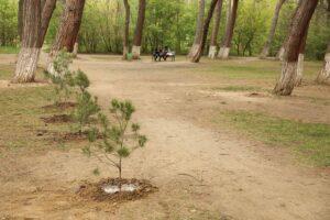რისგან ვიცავთ დიღმის ტყე-პარკს